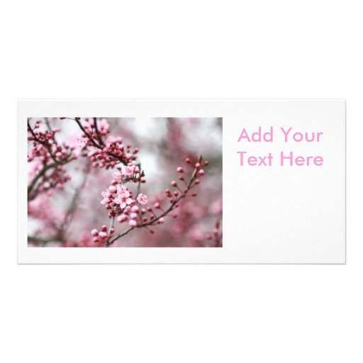 Pink Blossoms in Spring Photo Custom Photo Card