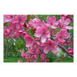 Pink Blossoms Print Print