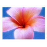 Pink & Blue Plumeria Frangipani Hawaii Flower
