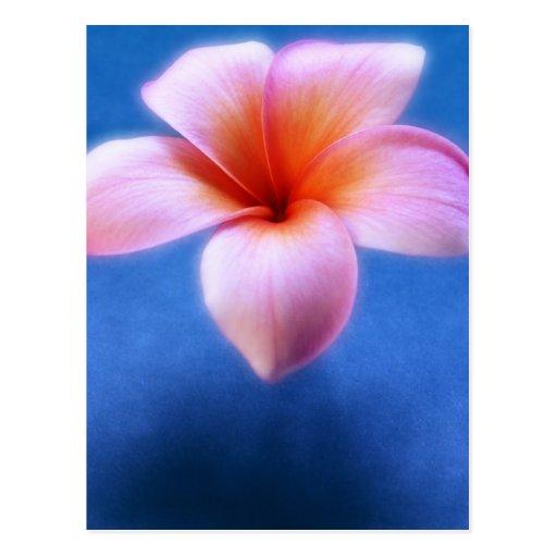 Pink & Blue Plumeria Frangipani Hawaii Flower Postcards