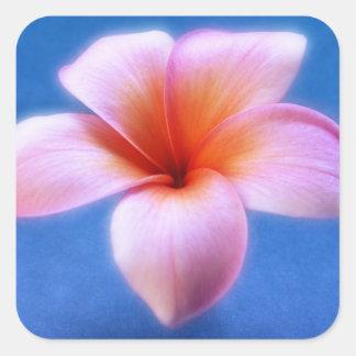 Pink & Blue Plumeria Frangipani Hawaii Flower Square Sticker