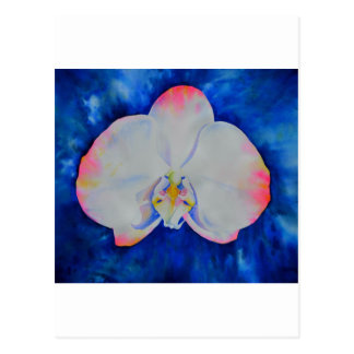 Pink Blush Orchid Post Card