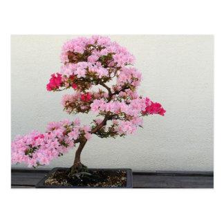 Pink Bonsai Tree Postcard