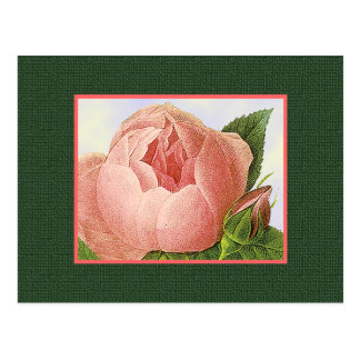 Pink Botanical Rose Blank Art Postcard