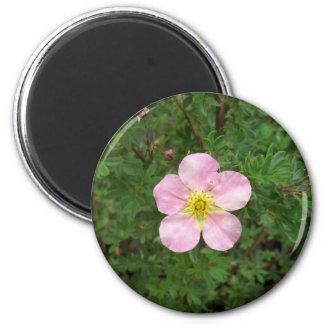 Pink Boxwood Magnet