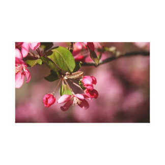 Pink Buds Canvas Stretched Canvas Prints