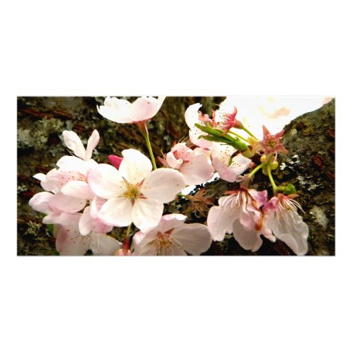 Pink Bunch Photo Greeting Card