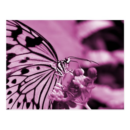 Pink Butterfly With Flowers Postcard