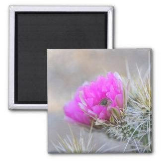 pink cactus bloom magnet