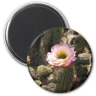 Pink Cactus Flower 6 Cm Round Magnet