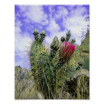 Pink Cactus Flower Poster