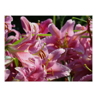 PINK CALLA LILIES Art Prints Office Artwork Lily Posters