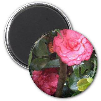 Pink Camelia de Costa Rica 6 Cm Round Magnet