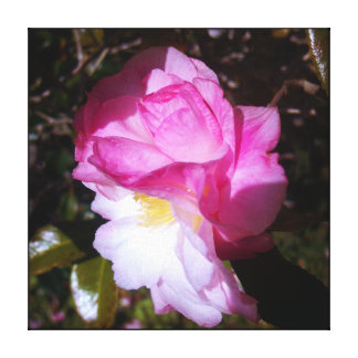 Pink Camellia Color Canvas Wall Decor Stretched Canvas Prints