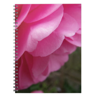 Pink Camellia Flower From Side Notebook