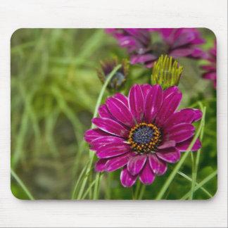 Pink Cape Daisy Flower mousemat Mouse Pad