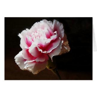 Pink Carnation Dianthus Flower Greeting Card