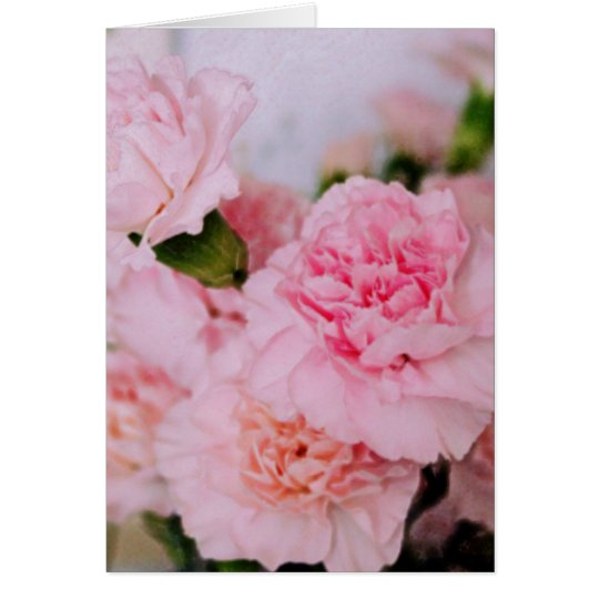 pink carnation flowers vintage style photography card