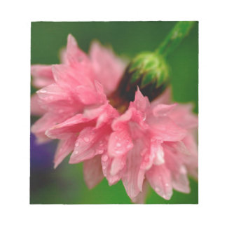 Pink Carnation Notepad