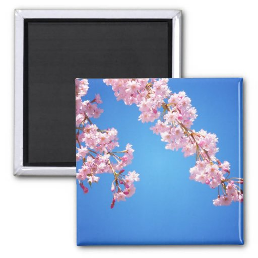 Pink Cherry Blossoms Against A Blue Sky, NYC Fridge Magnet