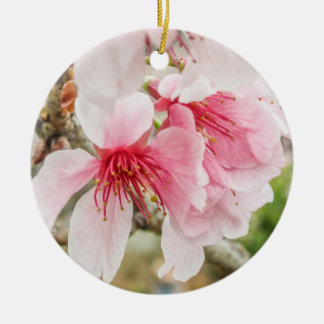 Pink Cherry Blossoms - Christmas Ornament