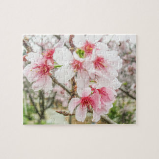 Pink Cherry Blossoms - Jigsaw Puzzle
