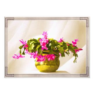 Pink Christmas Cactus Portrait Photograph