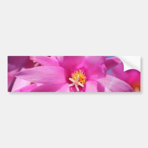Pink Christmas Cactus Schlumbergera Flower Blossom Bumper Stickers
