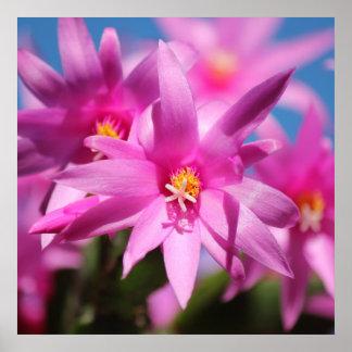 Pink Christmas Cactus Schlumbergera Flower Blossom Poster