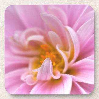 Pink Chrysanthemum Beverage Coaster