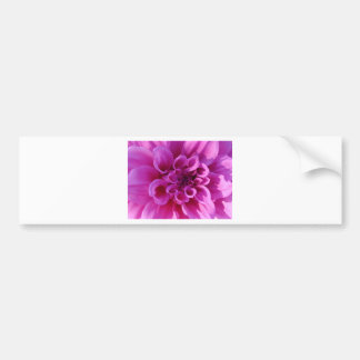 Pink Chrysanthemum Bumper Stickers