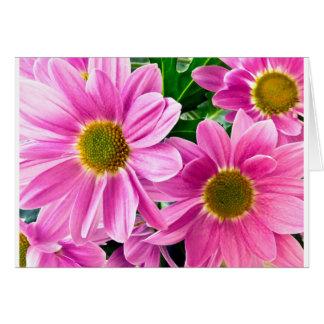 Pink chrysanthemum cards