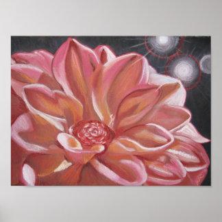 Pink chrysanthemum flower poster