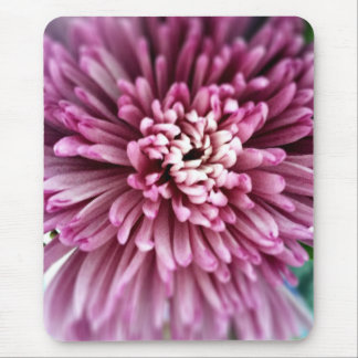 Pink Chrysanthemum Mouse Pad