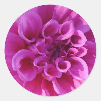 Pink Chrysanthemum Round Stickers