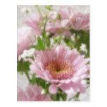 Pink Chrysanthemums 5 Elegance Postcard