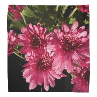 Pink Chrysanthemums Bandana