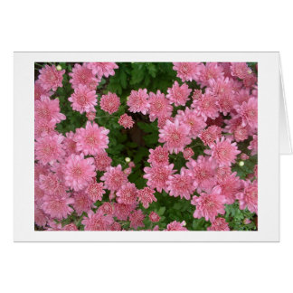 Pink Chrysanthemums Greeting Card