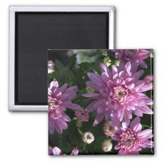 Pink Chrysanthemums Fridge Magnets