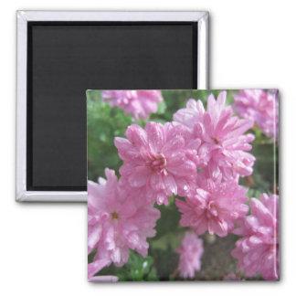 Pink Chrysanthemums Square Magnet