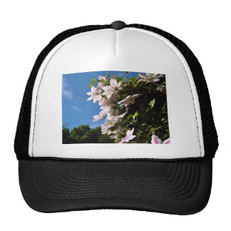 Pink clematis blossoming on a sunny day trucker hats