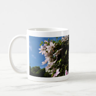 Pink clematis blossoming on a sunny day coffee mugs