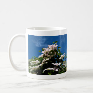 Pink clematis blossoming on a sunny day coffee mug
