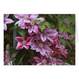 Pink Clematis Card