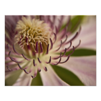 Pink Clematis • Card Invitation
