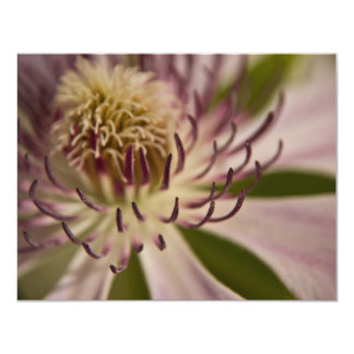 Pink Clematis • Card / Invitation