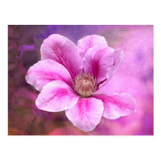Pink Clematis flower blossom Postcard