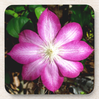 Pink Clematis Flower Beverage Coaster