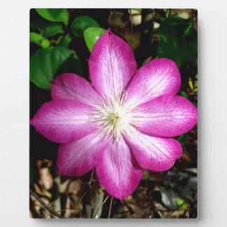 Pink Clematis Flower Photo Plaque
