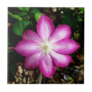 Pink Clematis Flower Small Square Tile